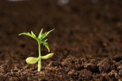 《土壤防治行动计划》将确定六个重污染示范区
